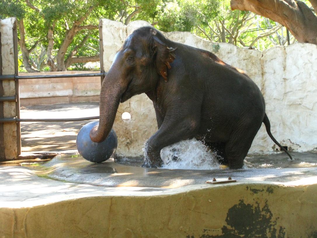 Elephant bath time!