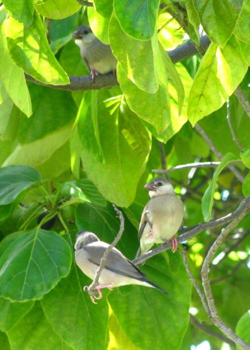 39/365 Baby birds