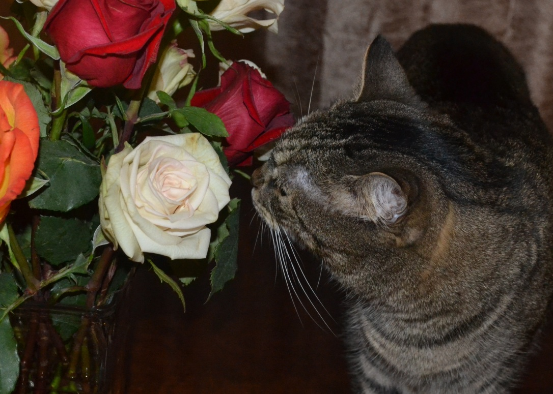 Caspain sniffs roses