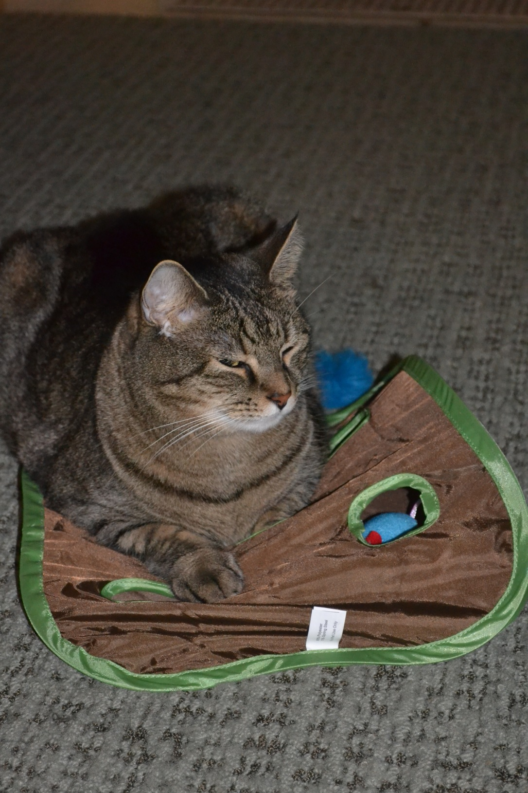Sitting on the cat toy