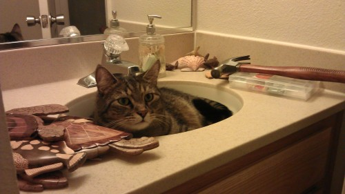 Caspian's in the sink again
