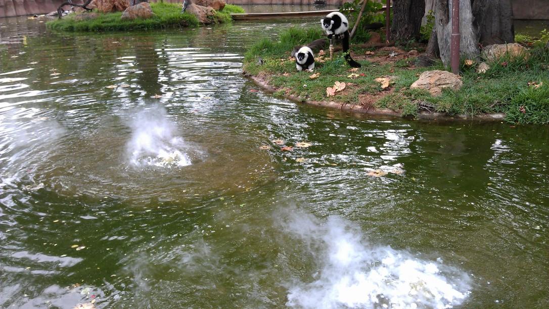1/17/2012 Lemurs discover steam
