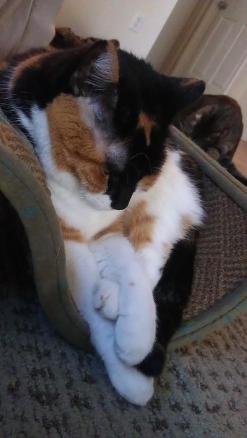 1/22/2012 squished Leena