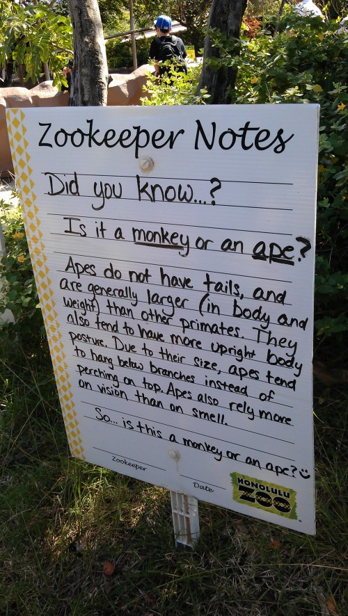 1/24/2012 Zookeeper Notes: Monkey or Ape?