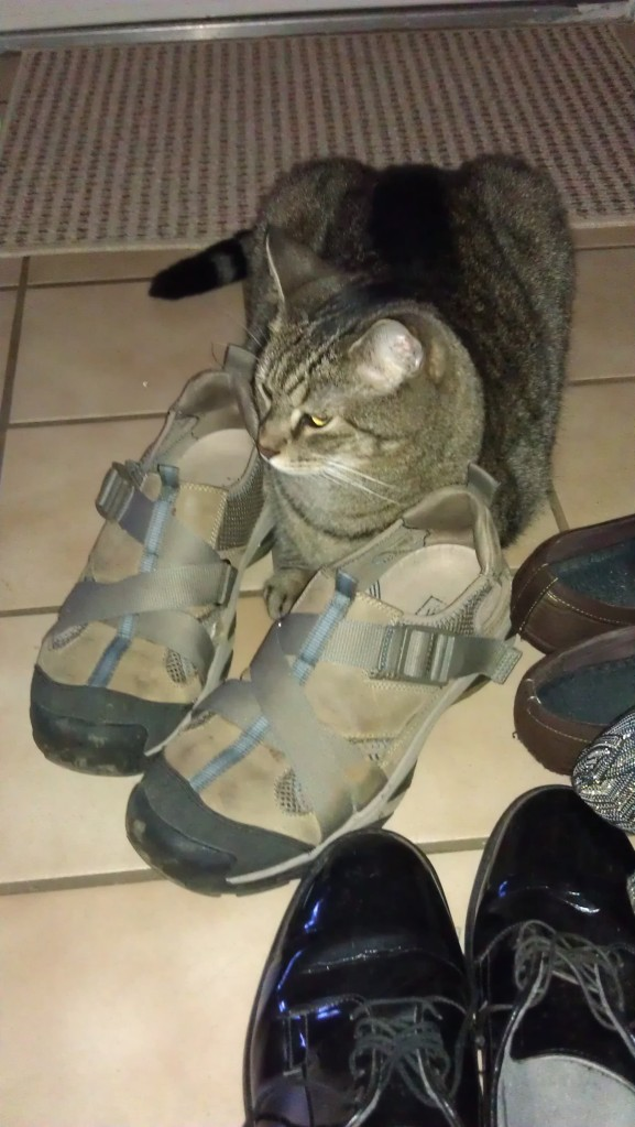 2/18/2012 Caspian loves shoes