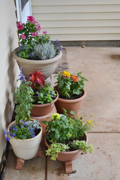 Container garden 1