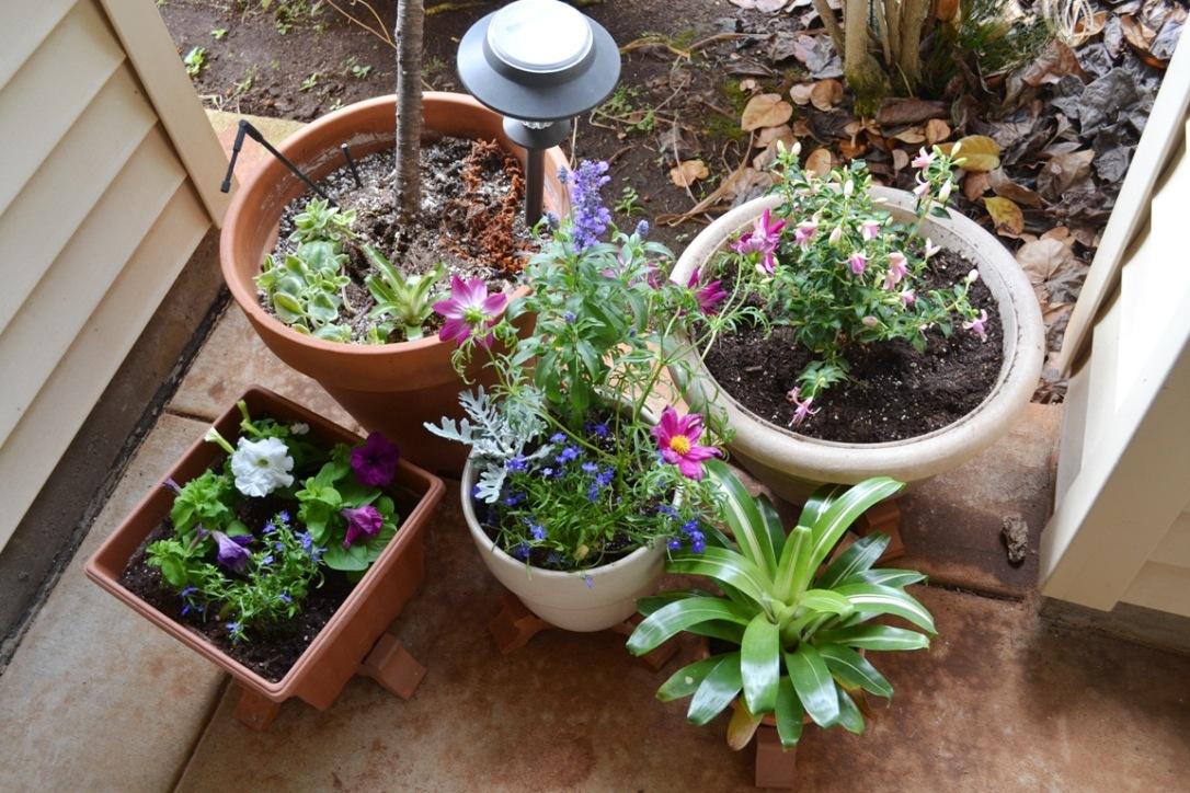 Container garden 2