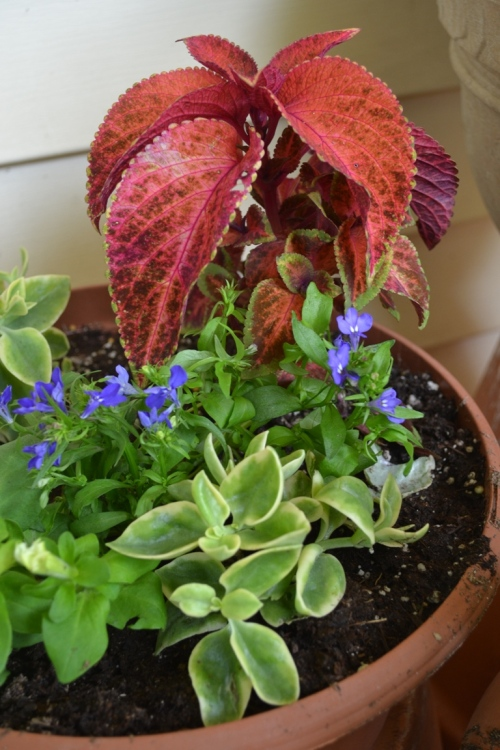 Container garden -- Red and purple plants