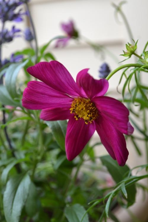 Container garden -- pink flower