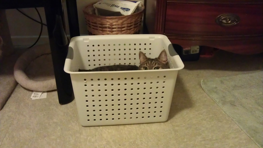 3/15/2012 Caspian in a hamper