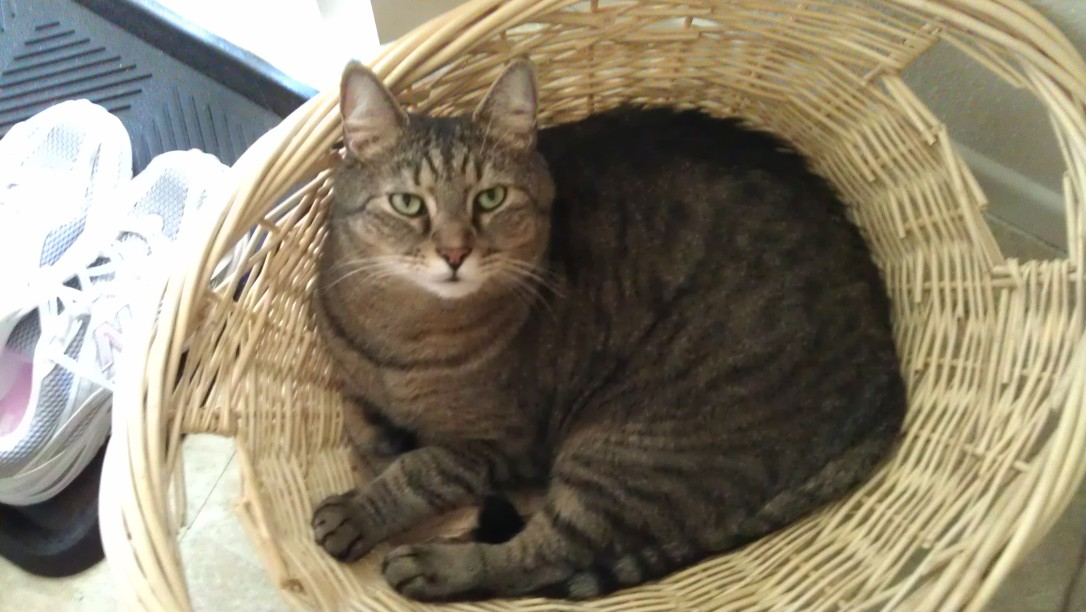 3/24/2012 Caspian in a basket