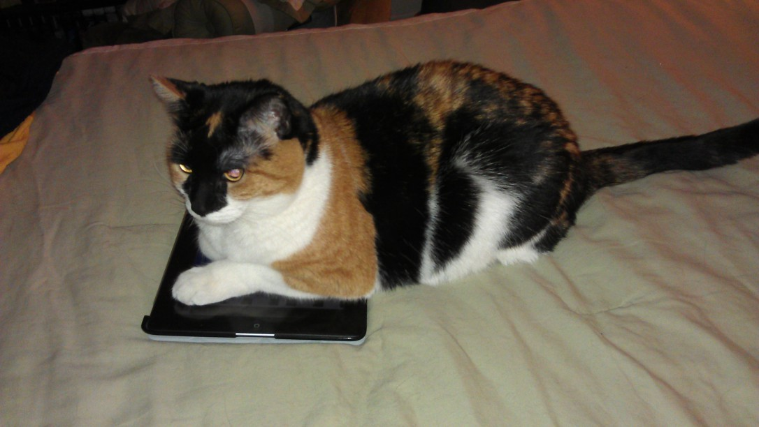 3/25/2012 Leena's iPad