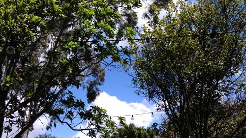 3/26/2012 blue sky backyard