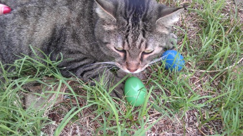 4/6/2012 Easter kitty