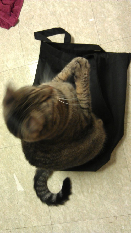 4/11/2012 Caspian applauds reusable bags