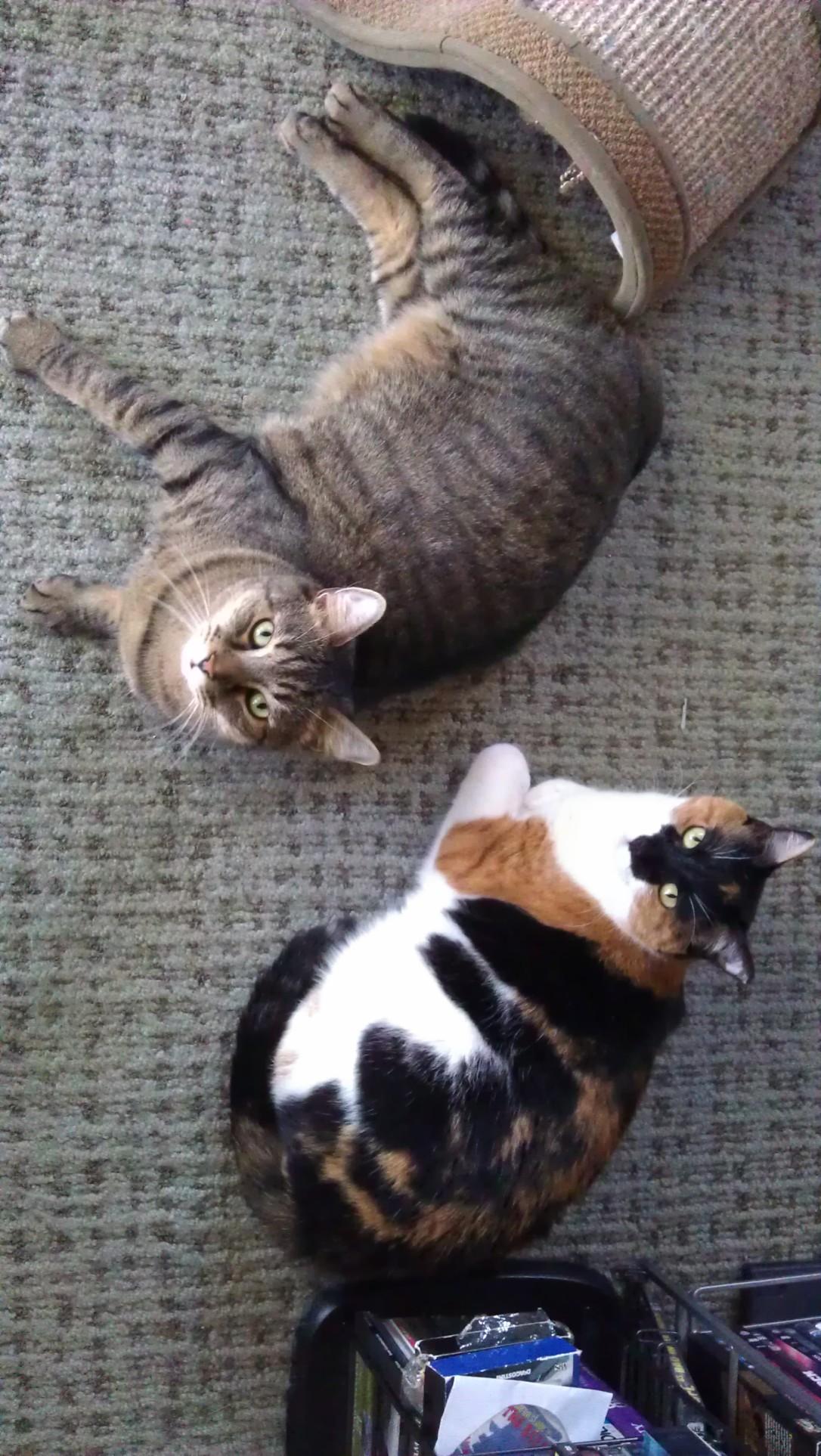5/9/2012 kitties being cute