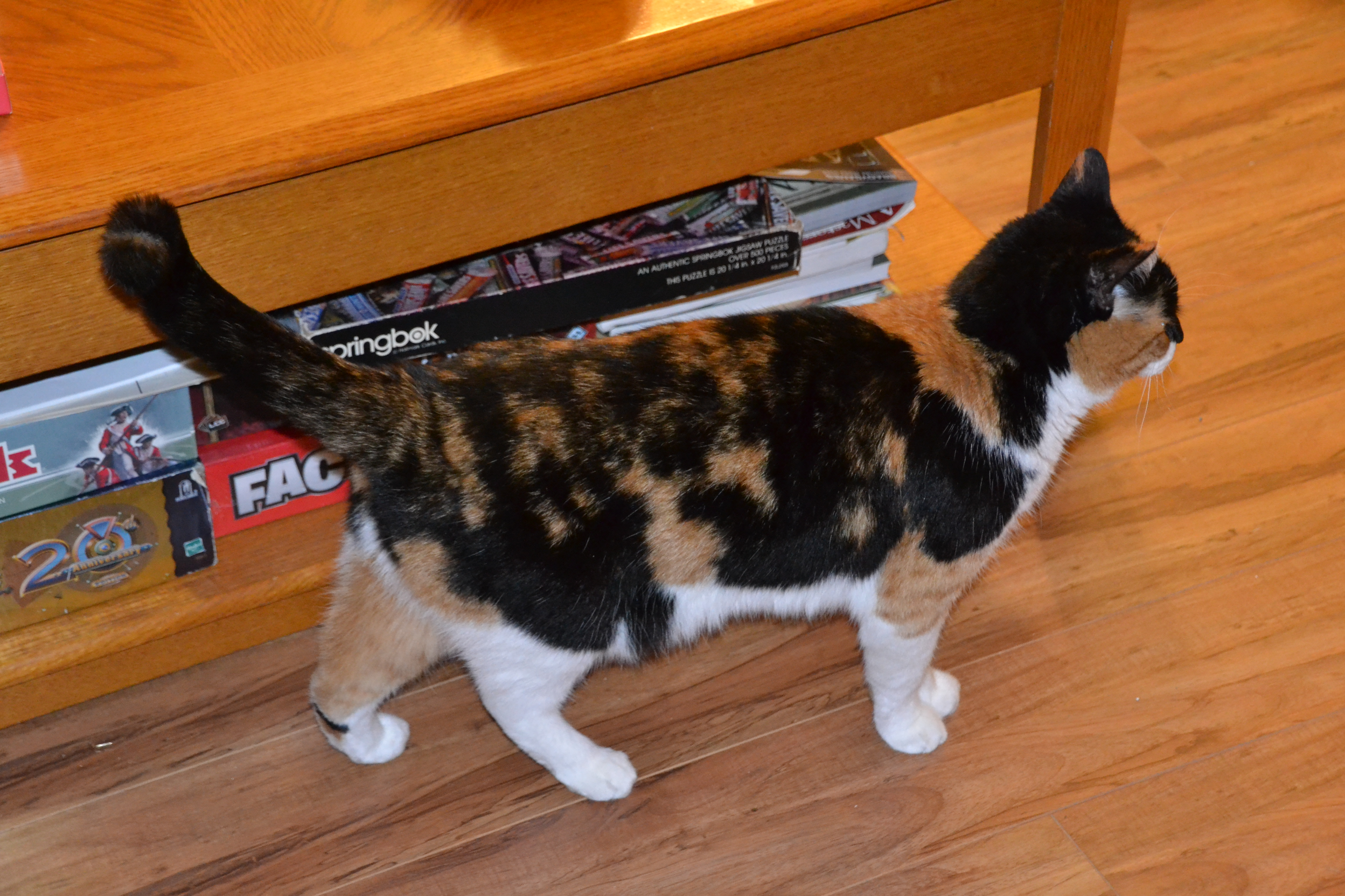 how to help my overweight cat lose weight