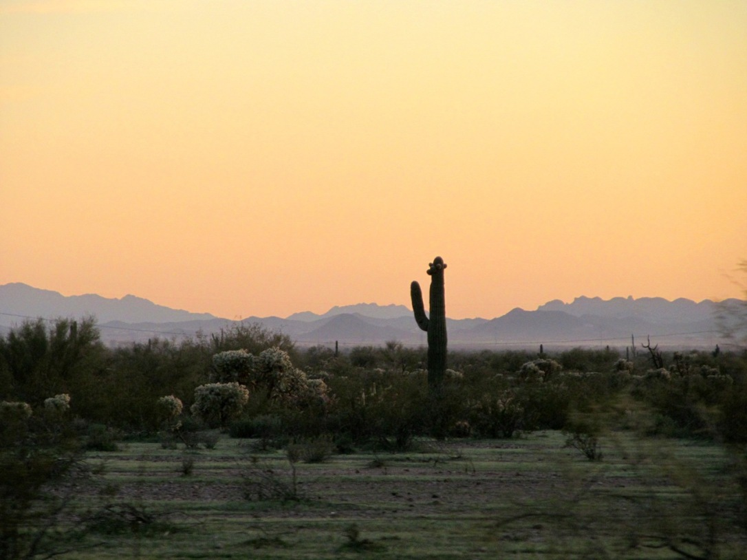 Arizona roadtrip, desert cactus sunset