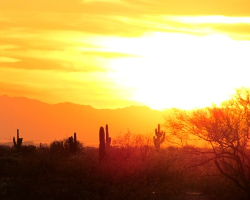 Arizona desert sunset, orange