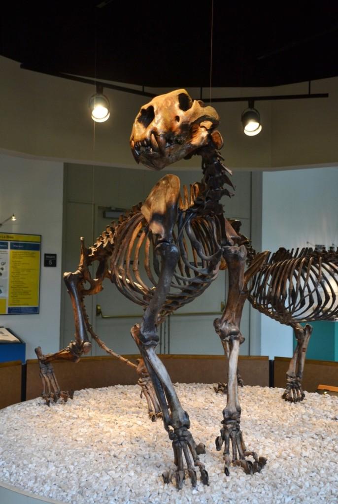 La Brea, giant jaguar