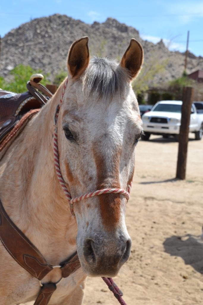 Pioneertown horse