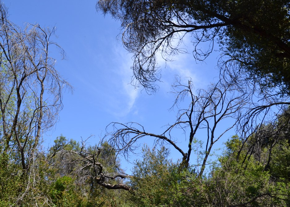 Blue Sky tree branches from fire