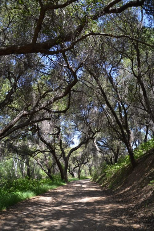 Blue Sky wooded trail