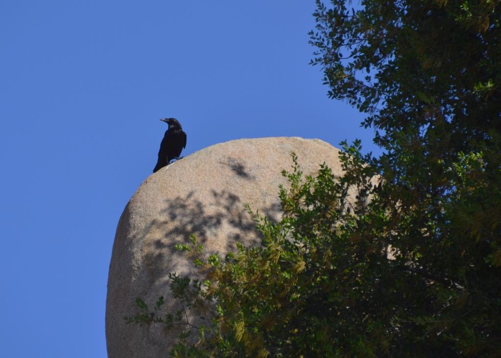 Lake Ramona, raven