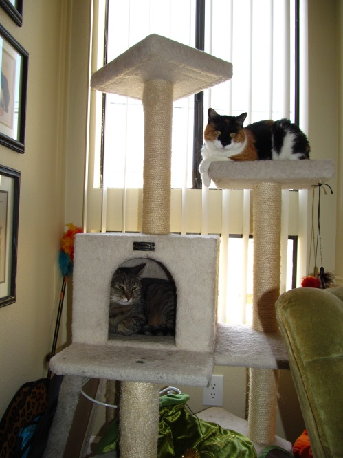 Kitties on the cat climber