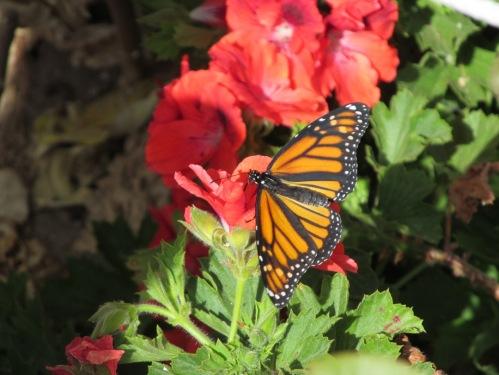Easter Balboa Park butterfly