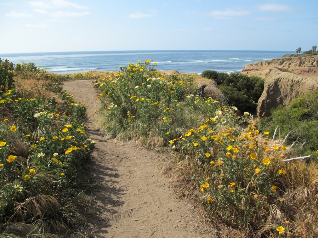 Sunset Cliffs, yellow flower path