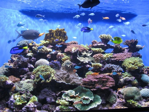 Birch Aquarium reef exhibit