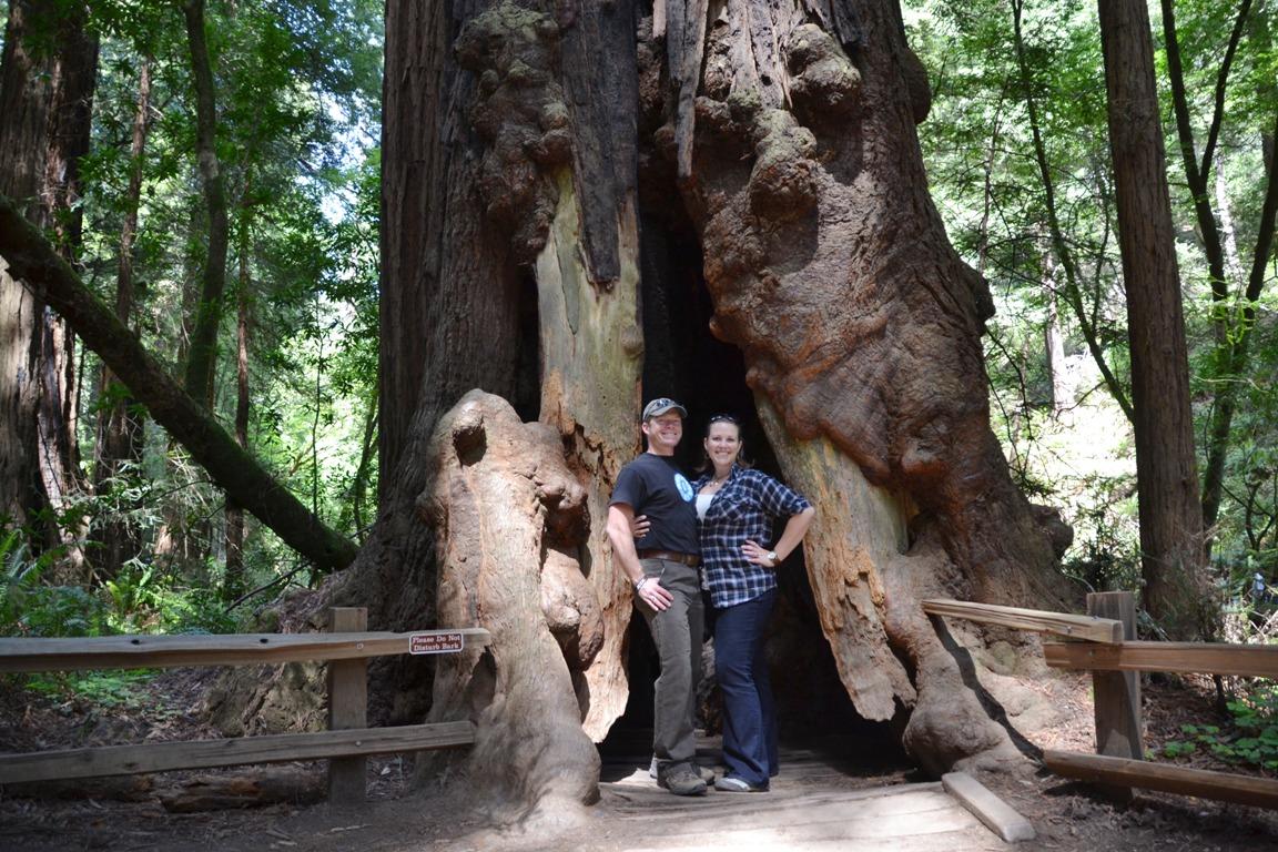San Francisco And The Muir Woods Joanna Volavka