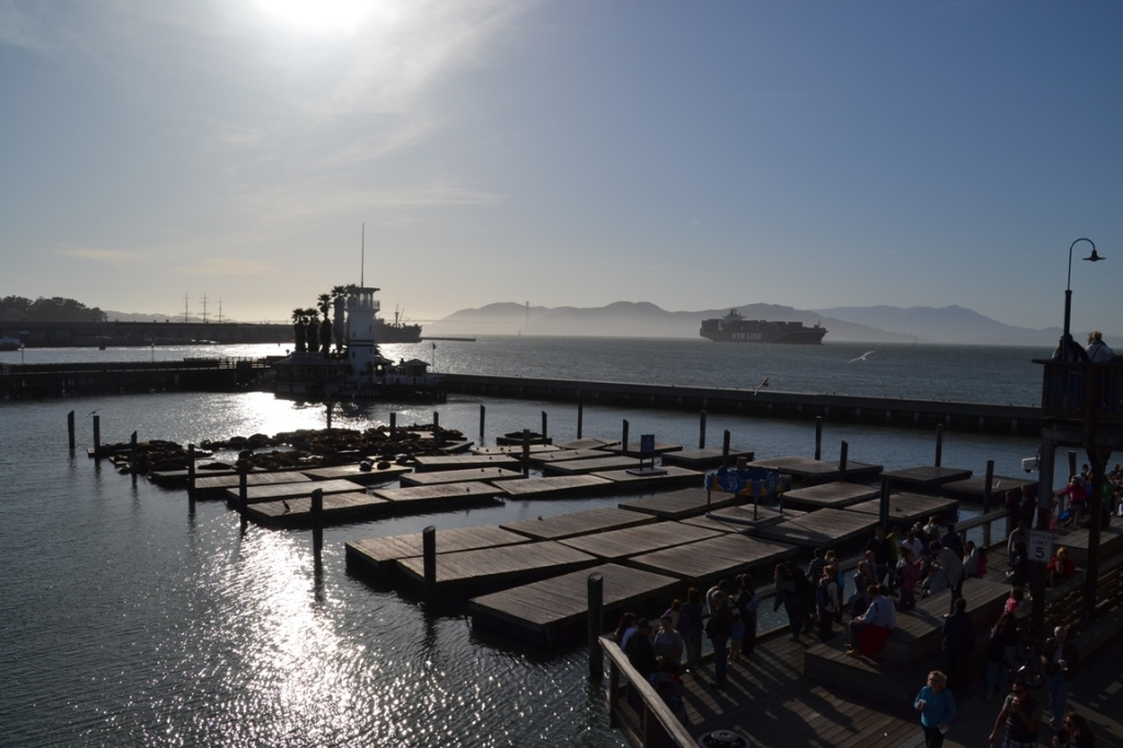 San Francisco floating docks sea lions
