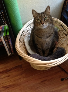 Caspian cat in his basket