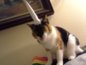 Leena the disgruntled unicorn