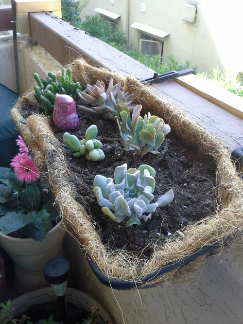 container garden, succulents