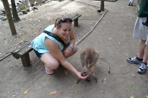 Australia feeding kangaroos