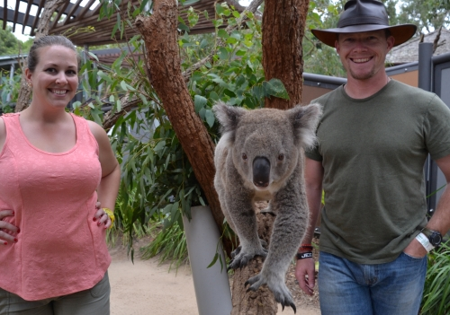 Australia, Sydney Taronga Zoo koala encounter
