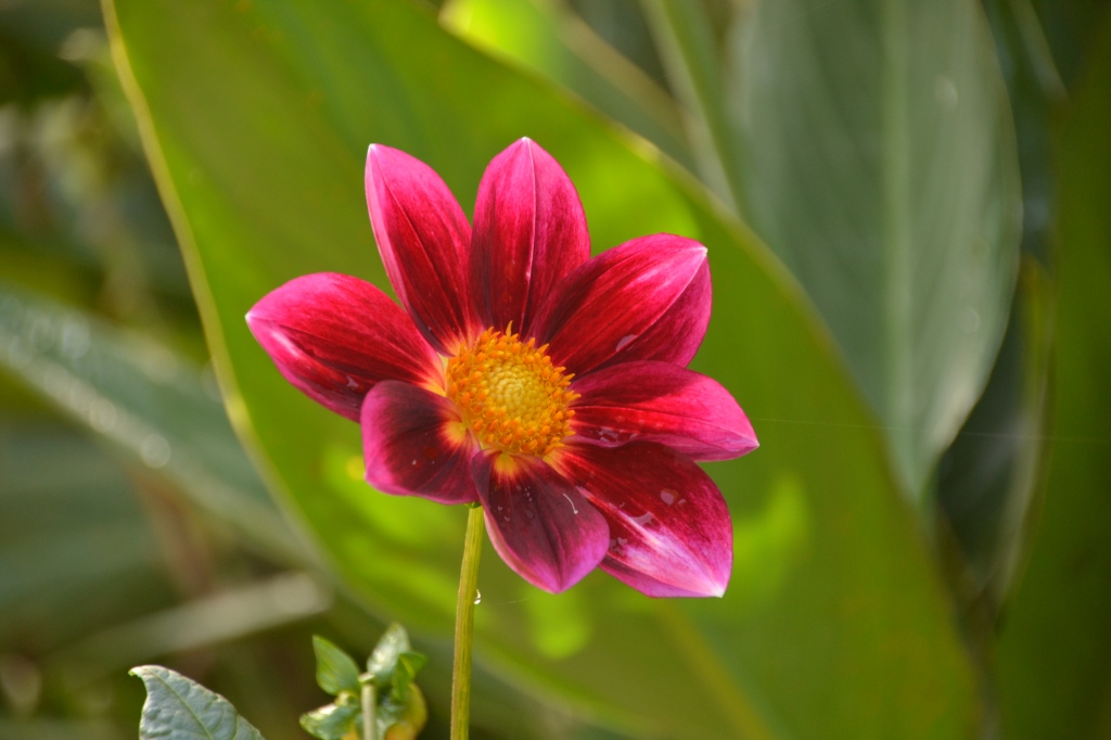 Australia, Sydney Royal Bonatincal Gardens flower