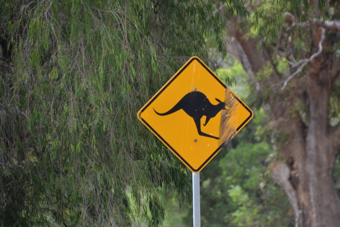 Australia, kangaroo crossing sign