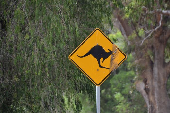 Australia, kangaroo crossing sign