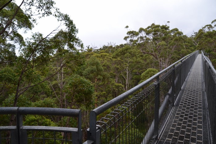 Australia, tree top walk path