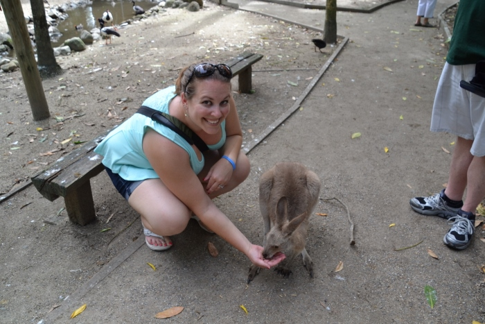 Australia, Port Douglas, Joanna feeding kangaroo