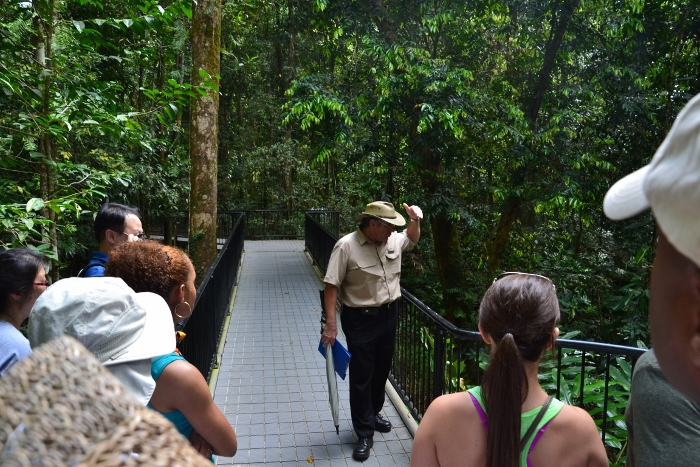 Australia, Port Douglas, Mossman Gorge rainforest