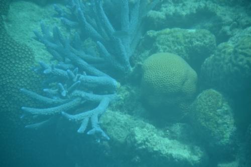 Australia, Port Douglas, reef coral