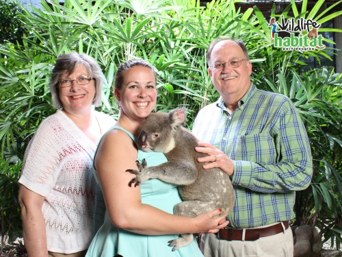 Australia, Port Douglas, Wildlife Habitat Koala photo