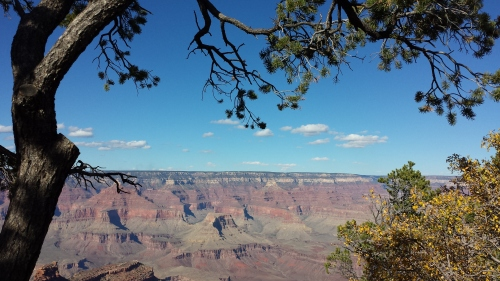 grand canyon, under a tree