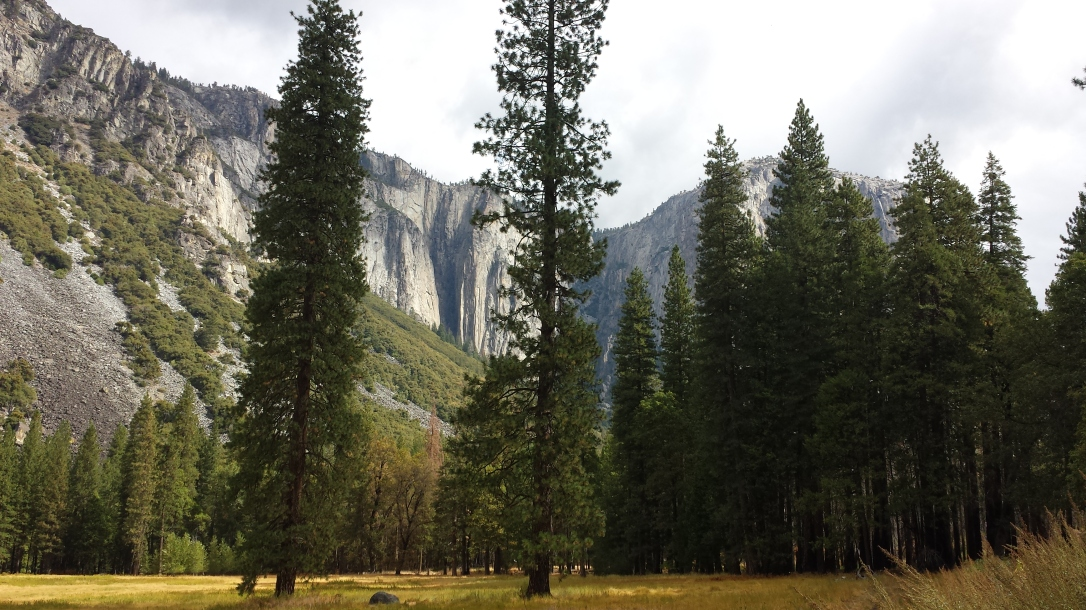 meadow near El Capitan