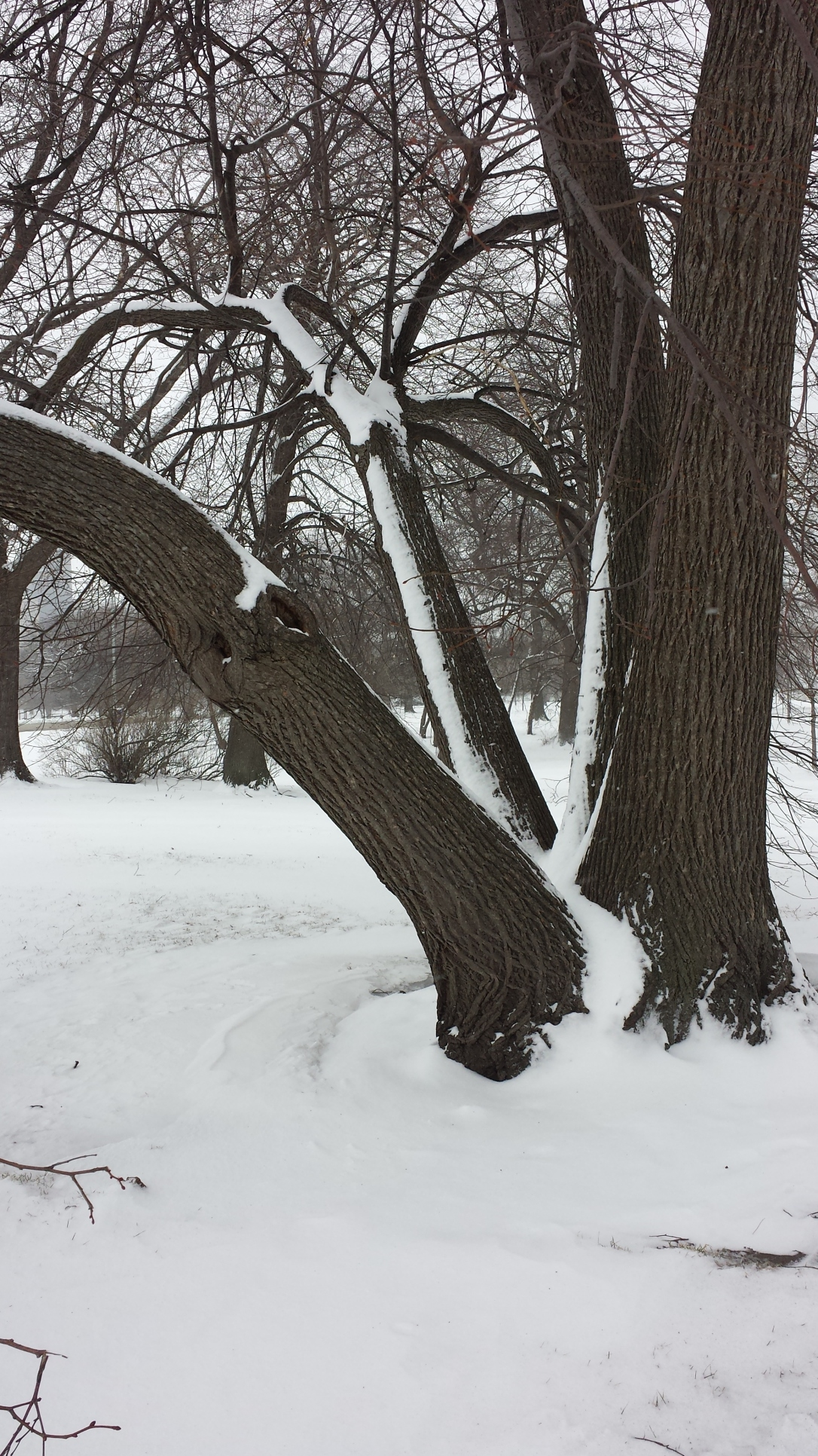Lake Michigan, snow stripes on trees